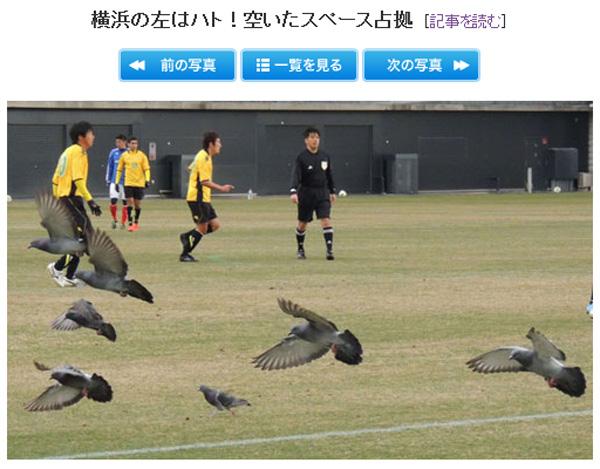 20130304-left-side-pigeon-01