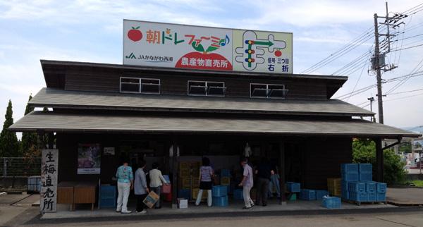 ロコさぬの梅仕事2014(その1)~小田原まで「十郎梅」を買いに行ってきた。 | タイトル